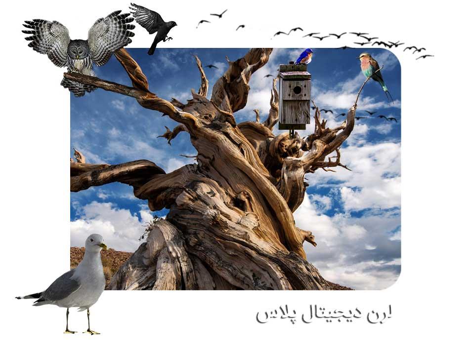تصاویر باکیفیت پرندگان PNG