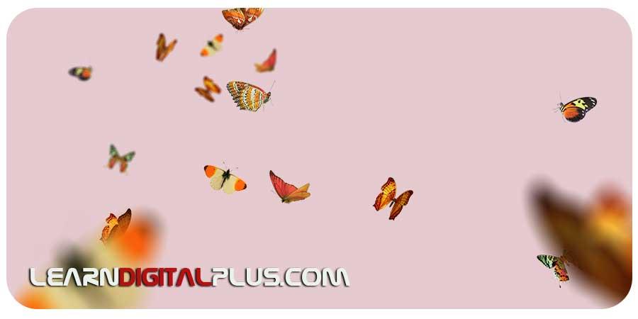 تصاویر پروانه PNG (فتوشاپ)