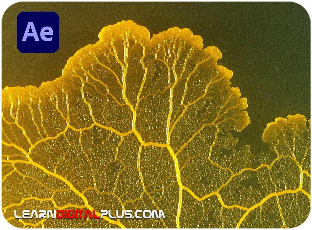 پلاگین Physarum (افترافکت)
